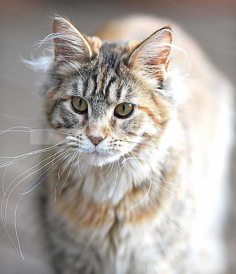 Gatos, Cats